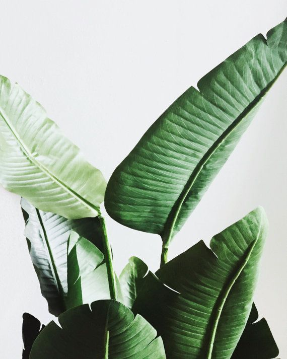 Banana Leaves Travel Light Printable Wall Art Decor Office Spaces Home Digital Prints Ideas