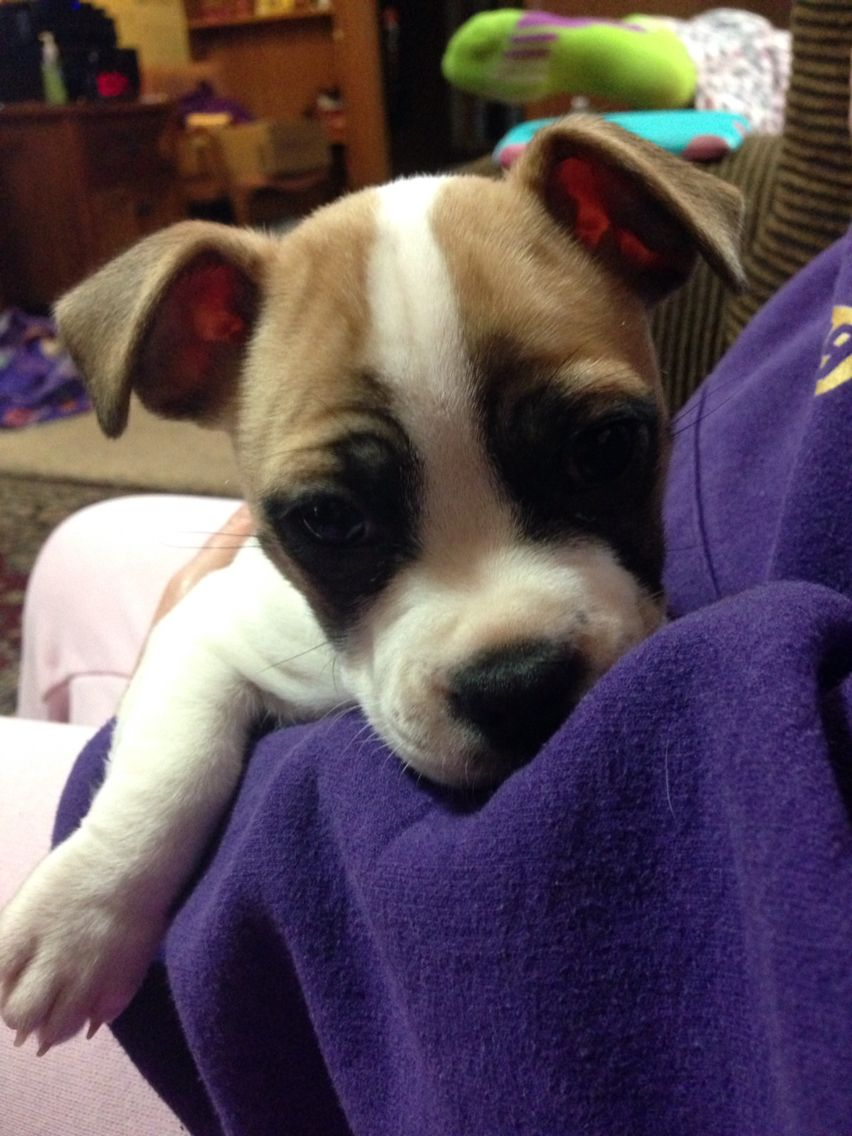 My moms rescue puppy from Animal Protection Agency of
