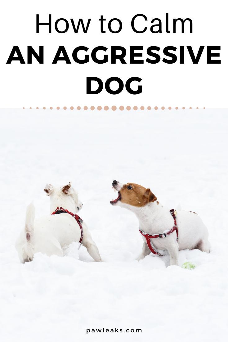 The Only Way To Calm An Aggressive Dog Aggressive Dog Dog Body Language Dog Behavior