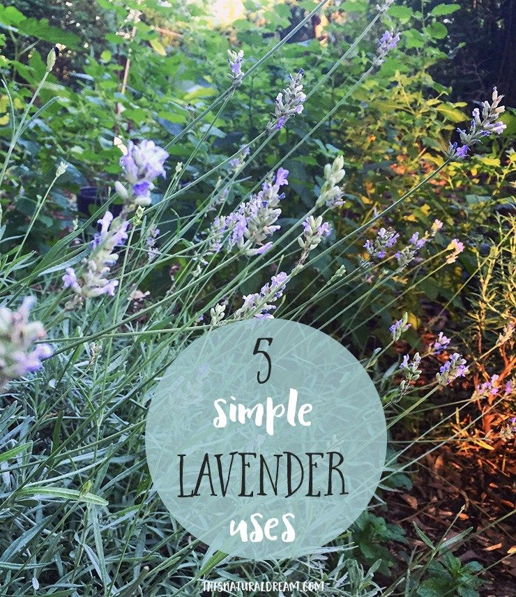 5 Simple Ways to use your lavender harvest | This Natural Dream