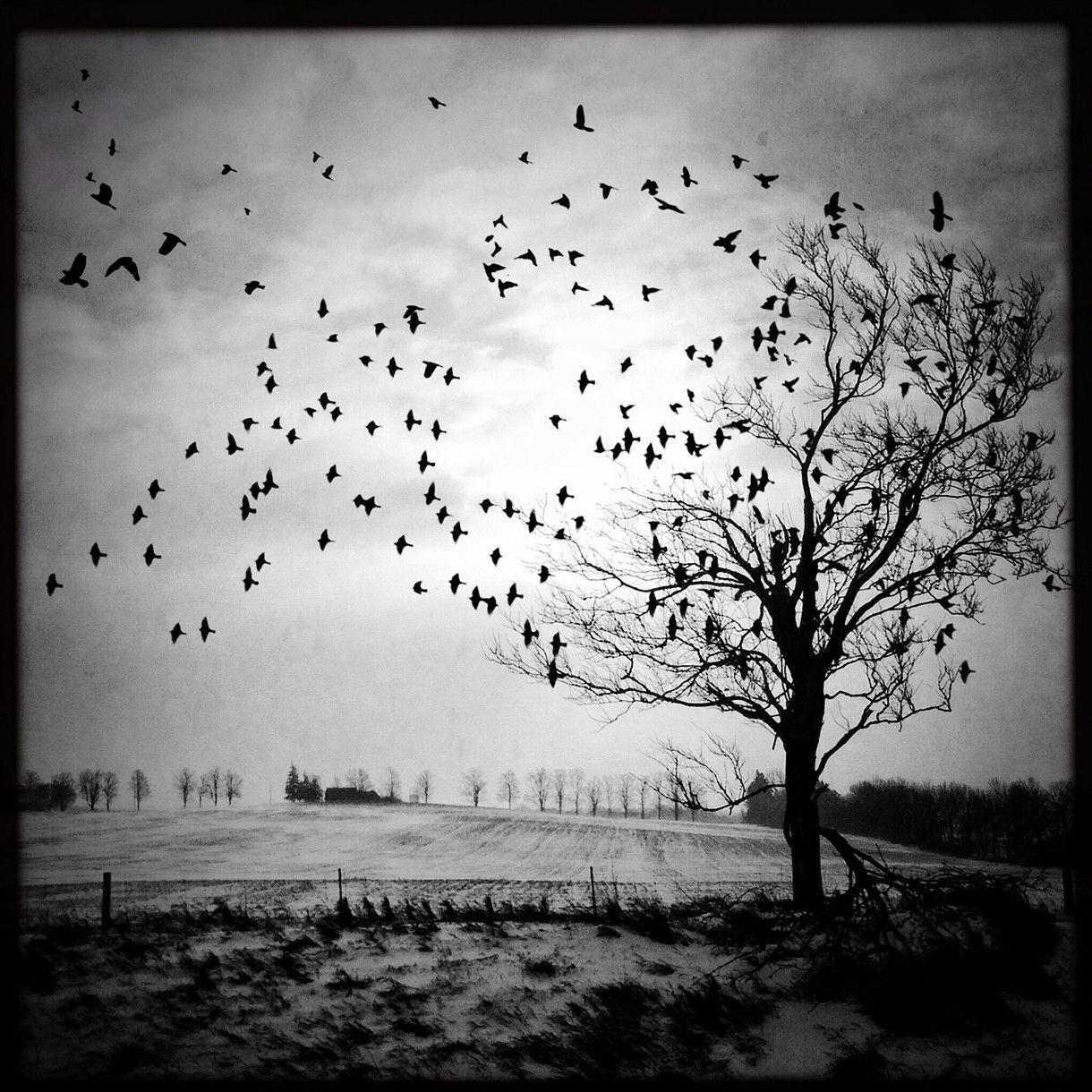 Dramatic Tree Photo Birds Flying Photo Nature Photo Black White Landscape Winter Tree Birds Black And White Birds Fine Art Photography Print Birds Flying