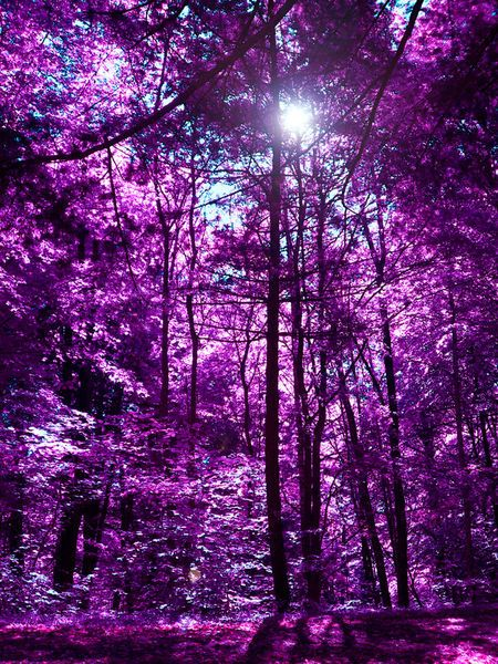 'purple forest II' by blackpool on artflakes.com as poster or art print $17.33