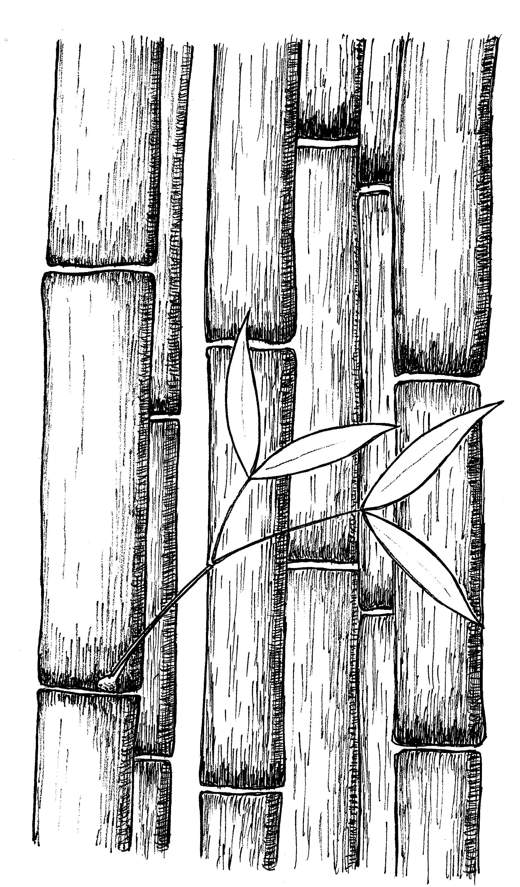 Pin On Wm Plant Doodles