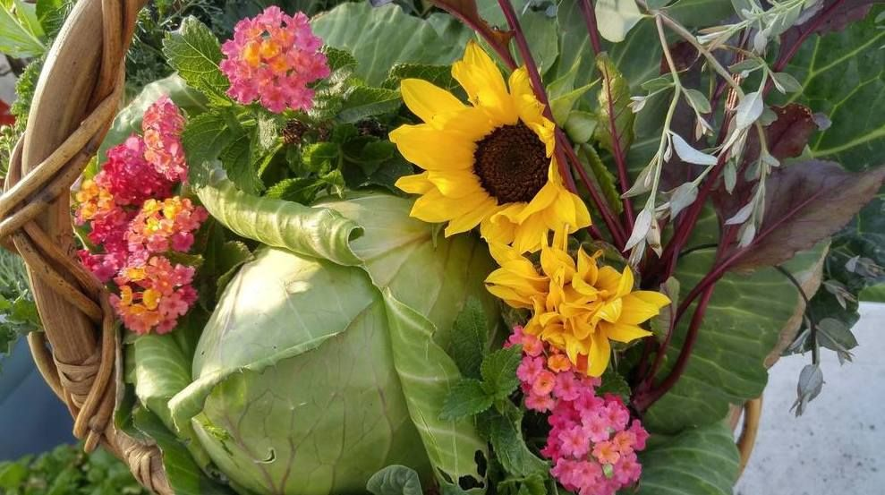 Greenhouse Harvest