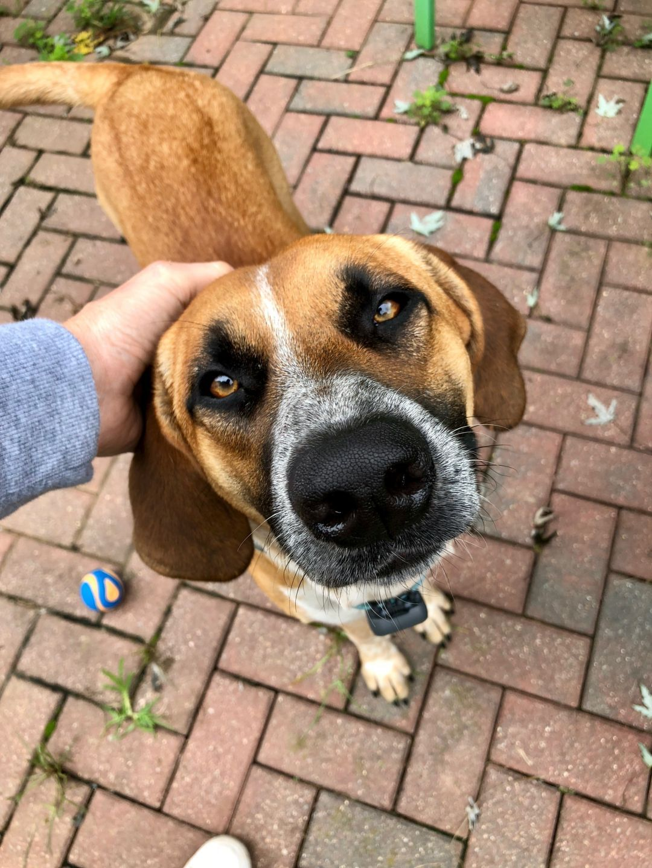 Adopt River On In 2020 Dog Adoption Dogs Pet Adoption Center