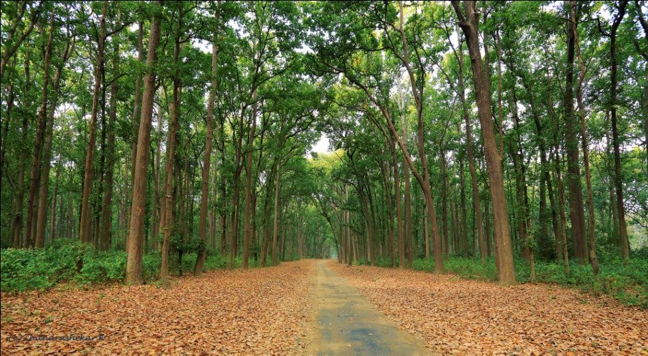 Corbett Tiger Reserve The Mother Of Wild India Corbett Landscape Country Roads