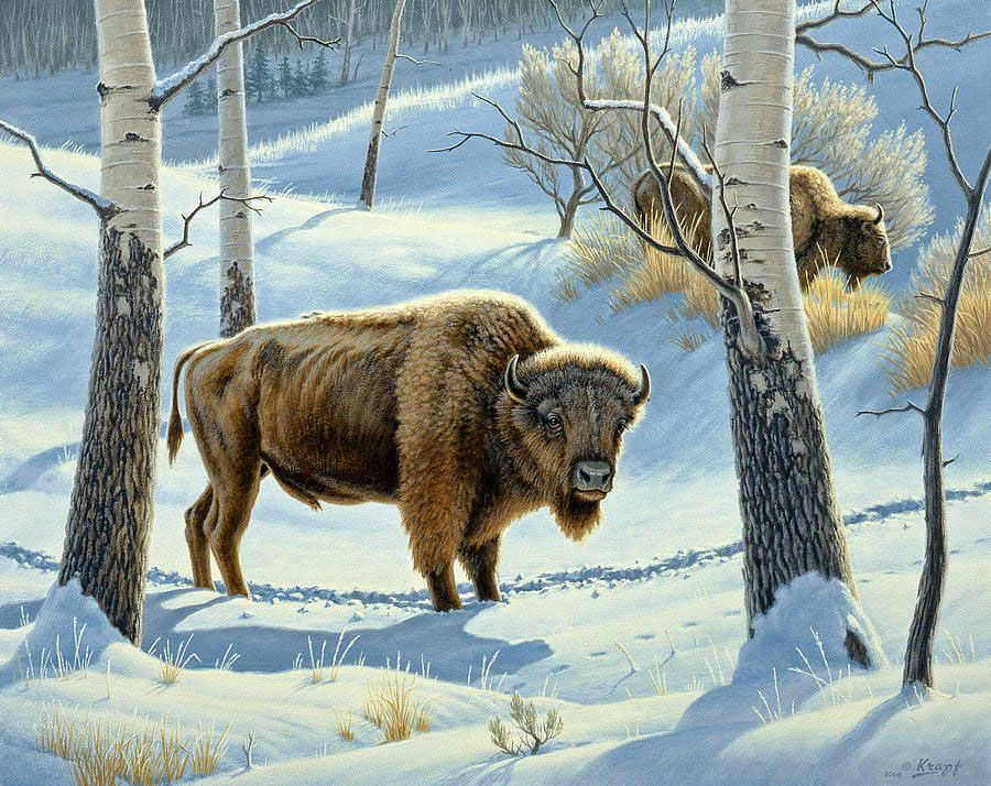 World Wildlife. Artiste Paul Krapf. . Discussion sur LiveInternet - service russe Diaries en ligne