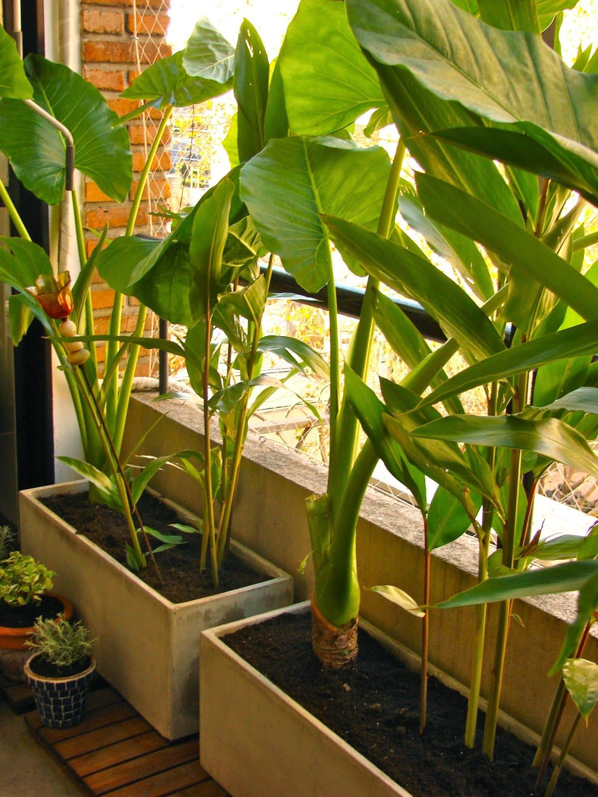 35++ Plantas tropicales de exterior ideas