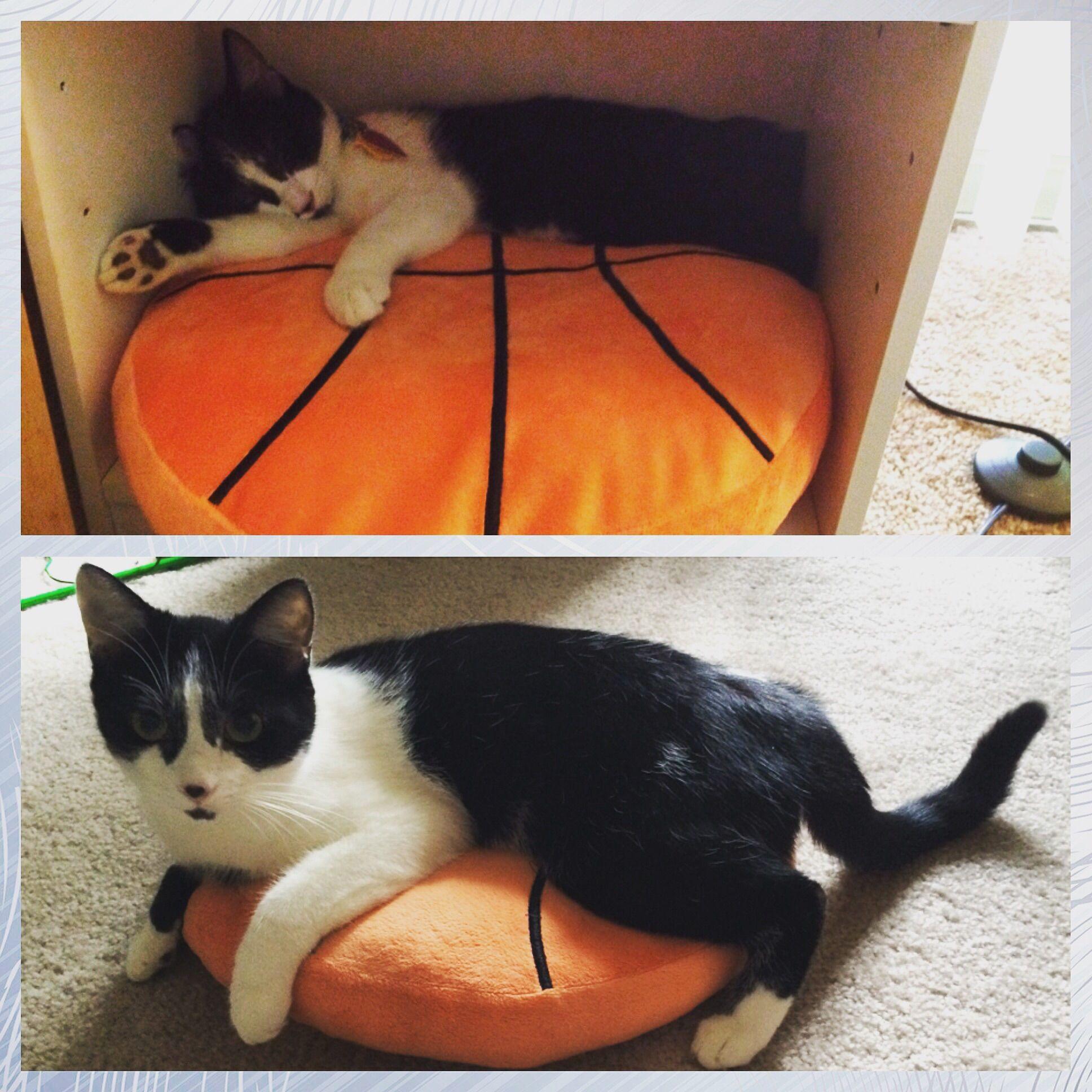 Same pillow one year later http://ift.tt/2dm398E