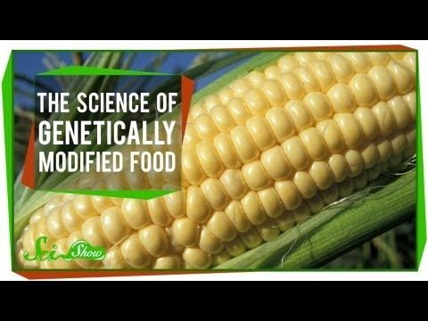 Great Video Explaining Genetically Engineered Foods Link Doesn T