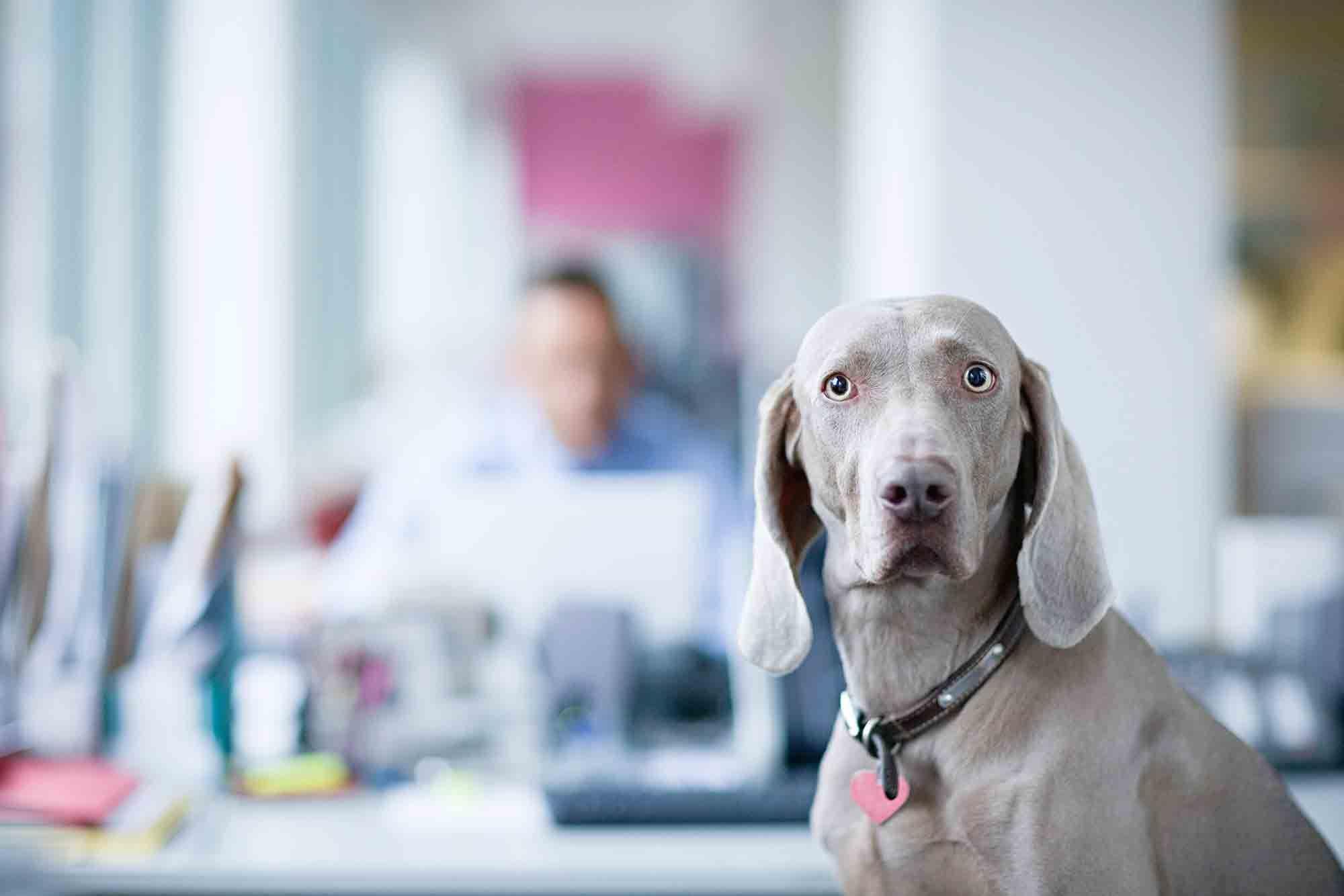 Bloat In Dogs A True Pet Emergency Summeridge Animal Clinic Blog Pet Emergency Pet Blog Dog Adoption