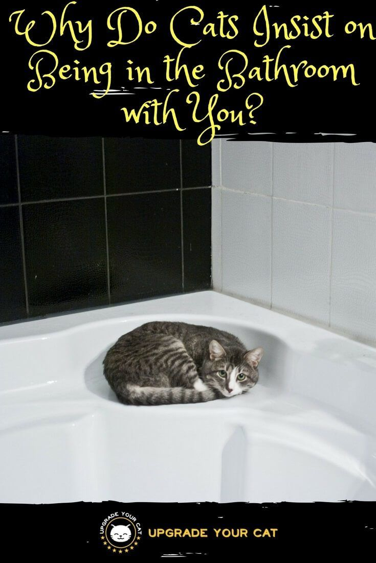 Why Do Cats Insist On Being In The Bathroom With You Upgrade Your Cat Cat Behavior Curious Cat Cat Care