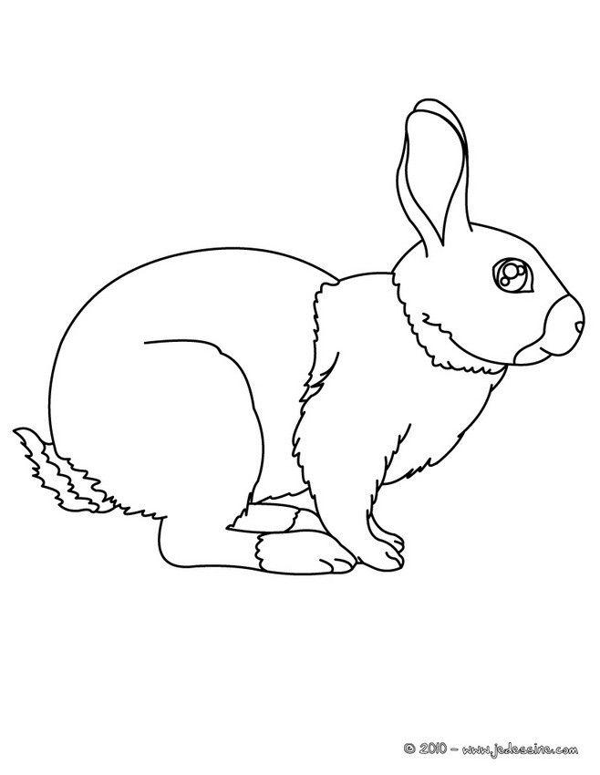 Coloriage d un lapin r aliste simple et facile pour les enfants et les adultes coloriages - Comment couper les griffes d un lapin ...