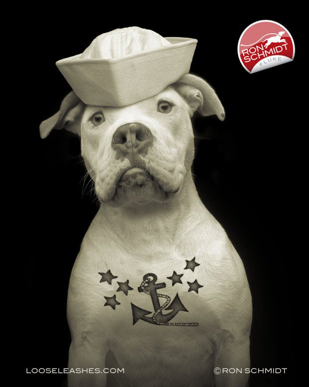 Fluke Print Pitbull Sailor With Anchor Tattoo Dog Art Nautical