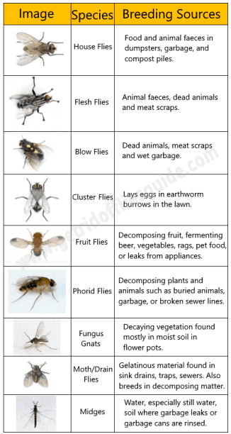 Most Common Species Of Flies And Their Breeding Sources