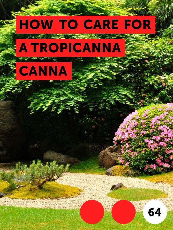 How to Care for a Tropicanna Canna Bulbs Plants for