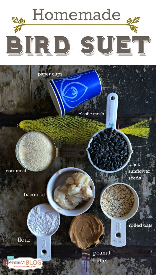 Homemade Bird Suet Recipe  | Don't forget the birds this winter! Make up a suet with products you probably already have. TodaysCreativeLife.com