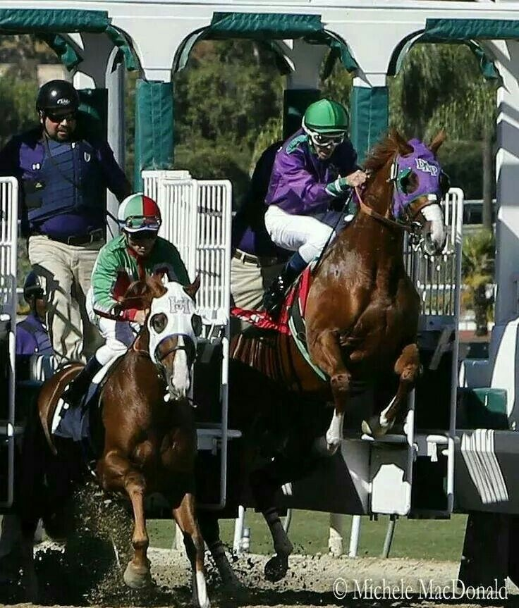 California Chrome out of the starting gate