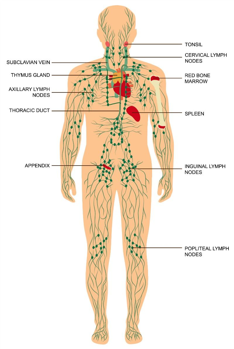 Lymphatic System Healthy Eatingdiet Pinterest Cleanse