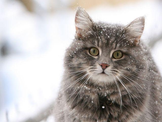 Fluffy fatty kitty//