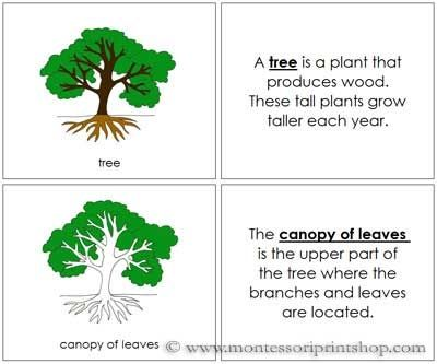 Tree Nomenclature Book Printable Montessori Nomenclature