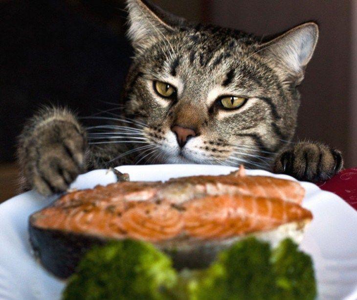 gato viendo el salmon para robarserlo