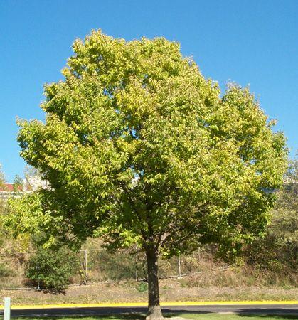 5 00 Perennial Place Hackberry Tree House Landscape Garden Center