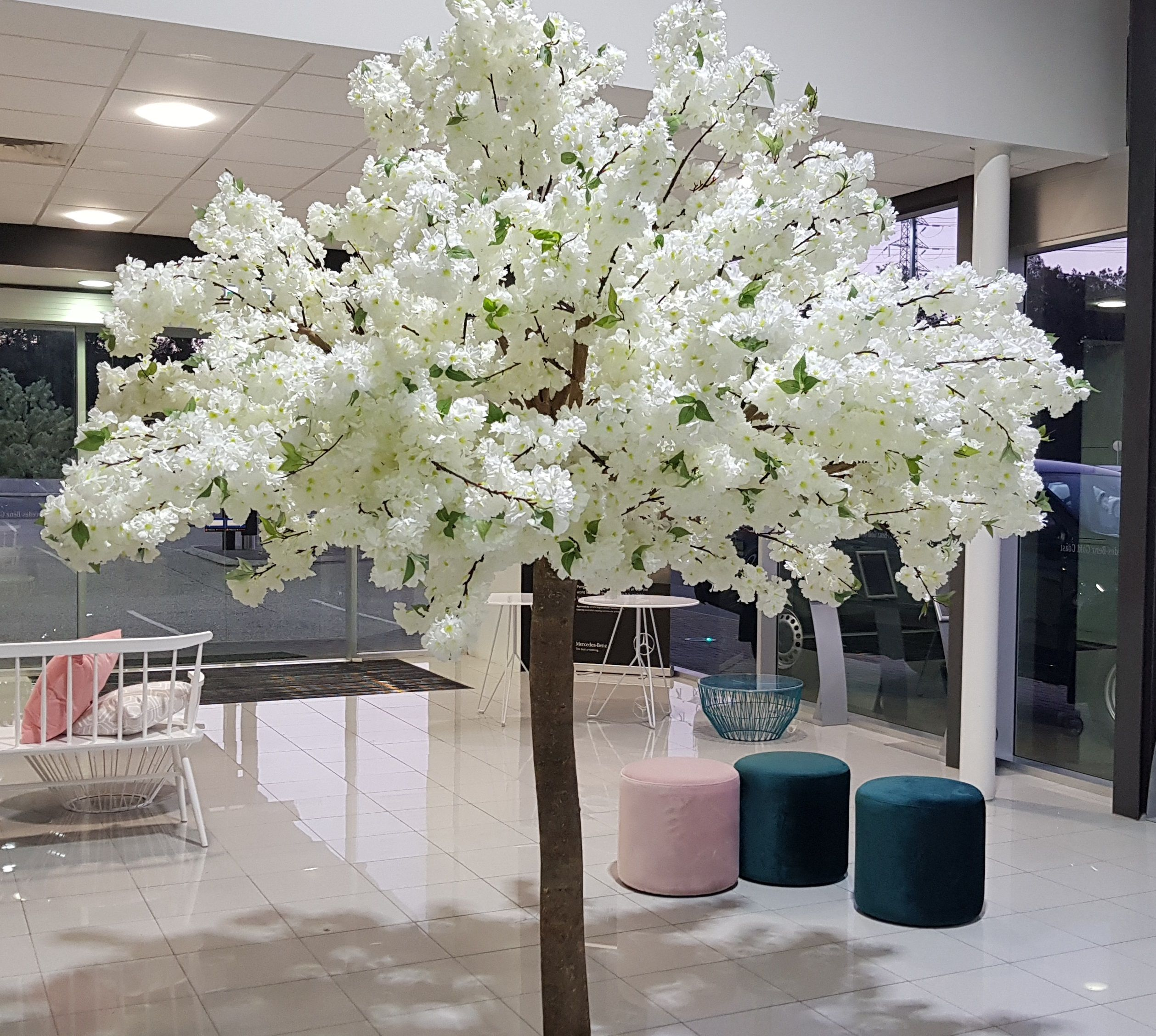 Our 2.5m high upright white cherry blossom trees @mercedesbenzgoldcoast . .  . #wedding #goldcoastweddings #fl… | White cherry blossom, White cherries,  Insta wedding