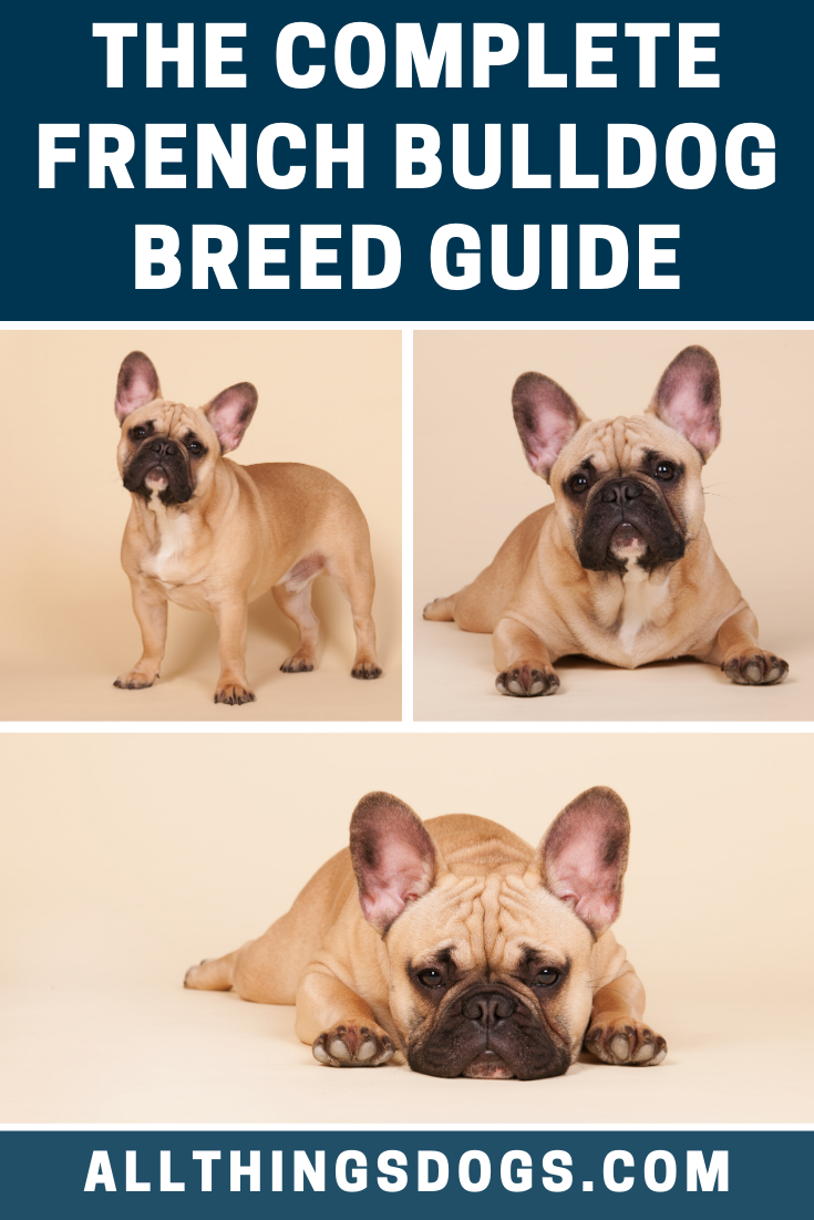 Pin On Dog Breeds