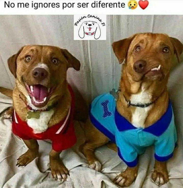 Siguenos En Facebook E Instagram Como Pasioncanina21 En 2020 Animales Frases Memes De Perros Chistosos Amor De Perro