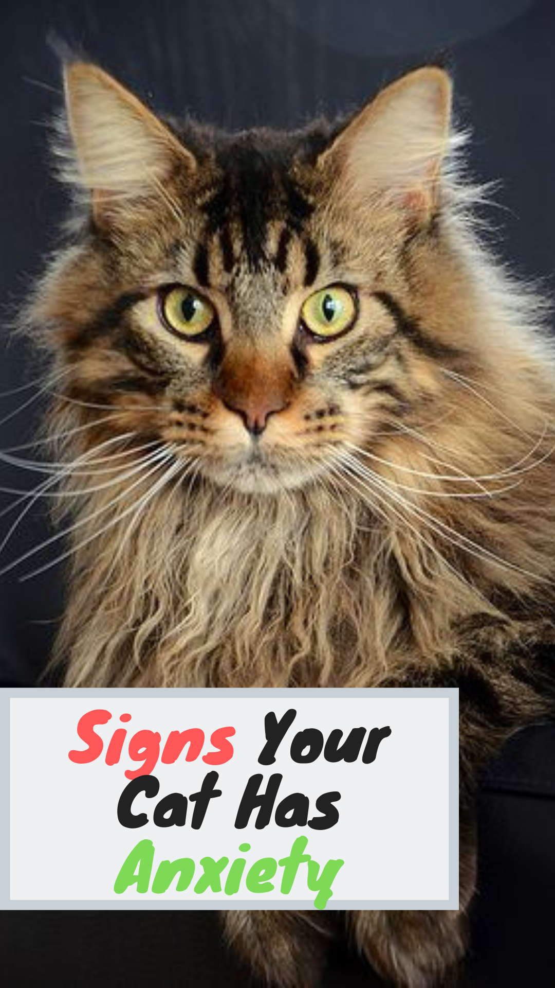 Top 6 Signs That Show Your Cat Is Happy Welfar4us In 2020 Cute Animal Photos Cat Photography Kittens Cutest
