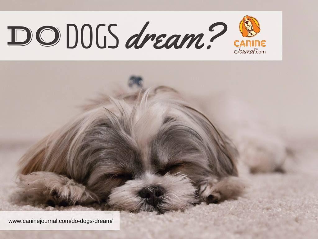 Do Dogs Dream Dogs Pet Life Dog Breeds