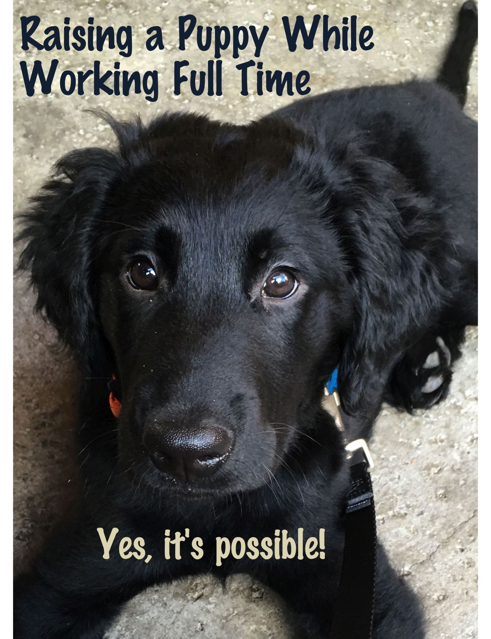 How We Made Raising Our Puppy While Working Full Time Work It Is