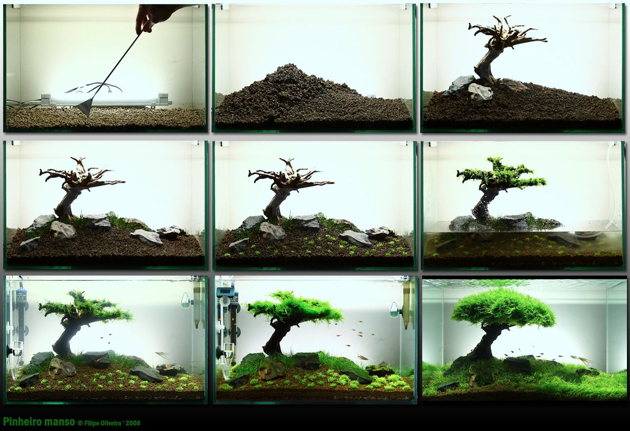 aquascaping 'how-to' reduced to 9 pictures - i imagine it's
