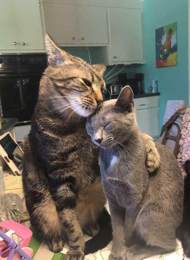 Photo of Shy Cat no se abrirá a nadie, hasta que Rescue Kitten le enseñe a amar abrazando todos los días