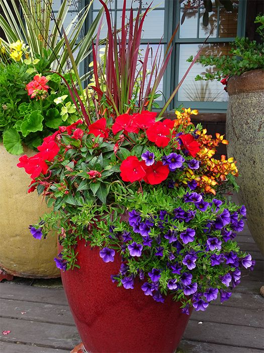 Find many fresh planting ideas for your containers in our Spring ...