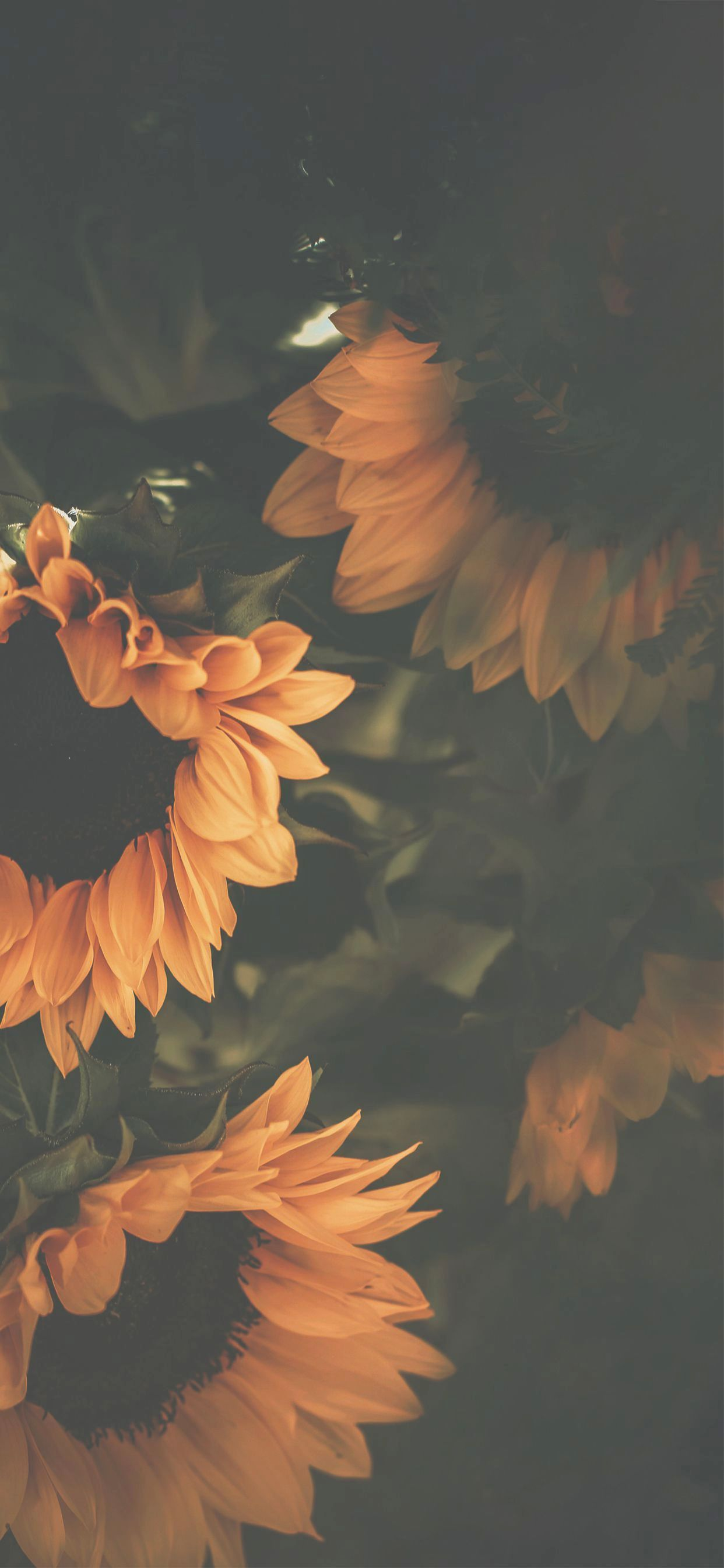 Wallpapers Iphone 7 Plus Pinterest Versus Iphone Background Tumblr Flowers It Is Ga Sunflower Iphone Wallpaper Backgrounds Phone Wallpapers Sunflower Wallpaper