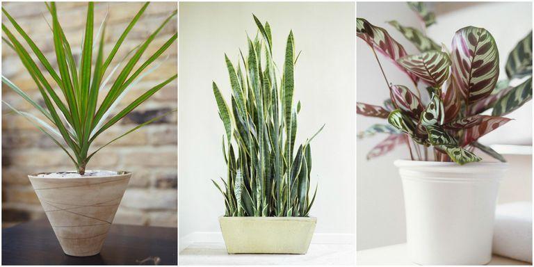 best indoor plants low light houseplant 35 sample photos indoor