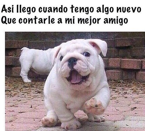 Imagen De Memes Perros And Chistes Cute Animals Baby Animals Animals
