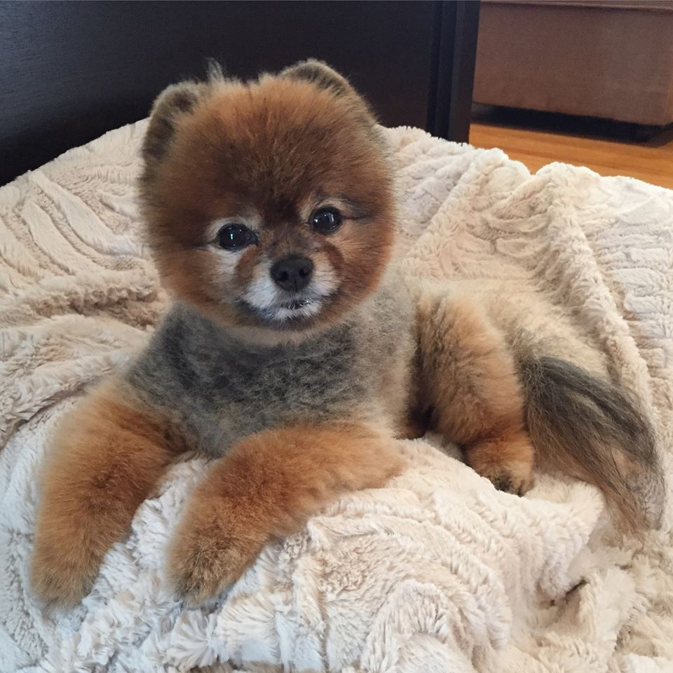 Be the person your dog thinks you are emmie the pomeranian
