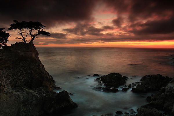 """""""The Lone Cypress Observes a Pebble Beach Sunset"""" - by Dave Storym"""