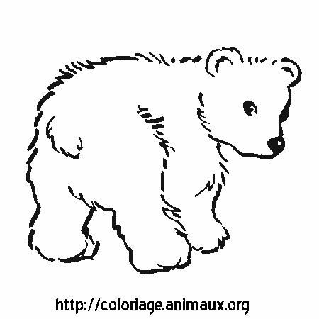 Ours polaire dessin google search polar bear - Dessiner un ours en maternelle ...
