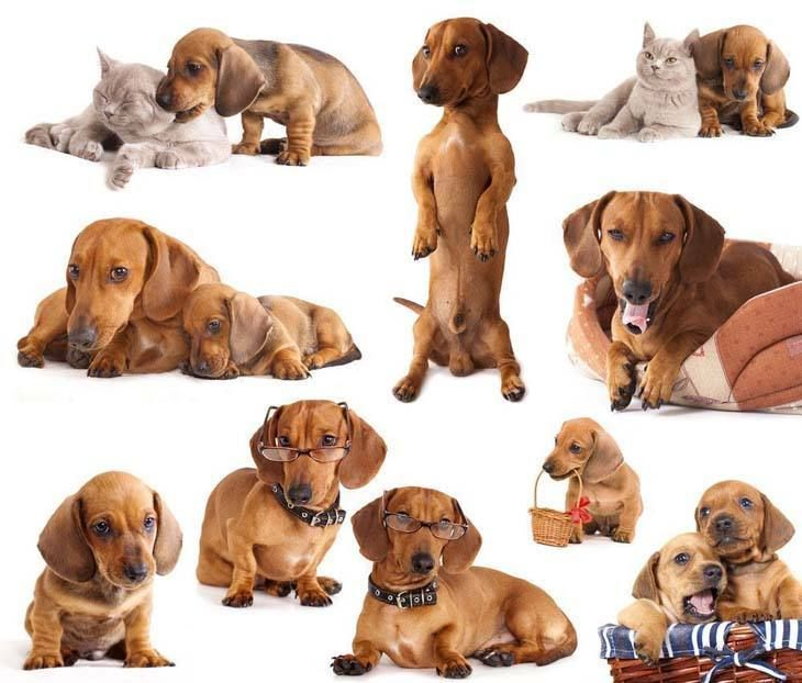 Dachshund Names Cute Male Female Doxie Naming Ideas Weenie