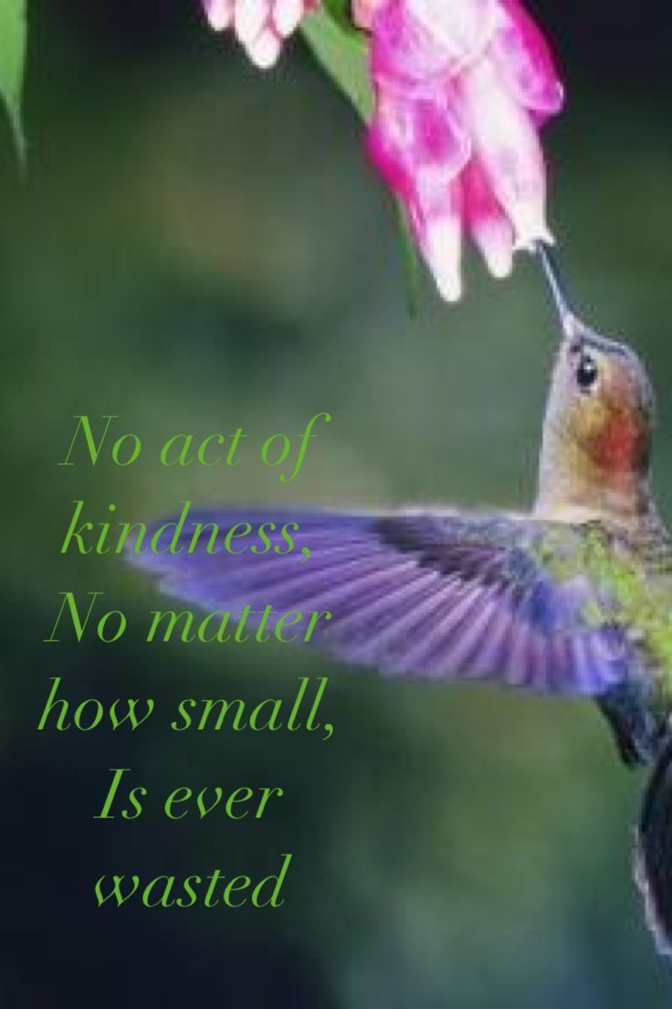 Birds Quotes Hummingbird Images And Quotes Lovequotesgram  Quotes Etc