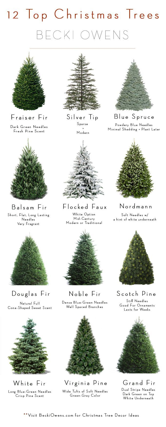 All About Christmas Trees Guide Decorating Becki Owens Christmas Tree Guide Types Of Christmas Trees Live Christmas Trees