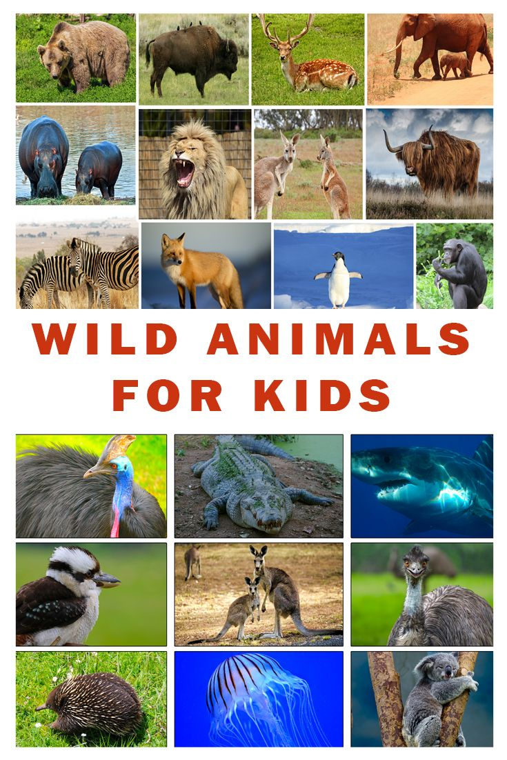 Learn names and sounds of wild animals for kids. A fun and