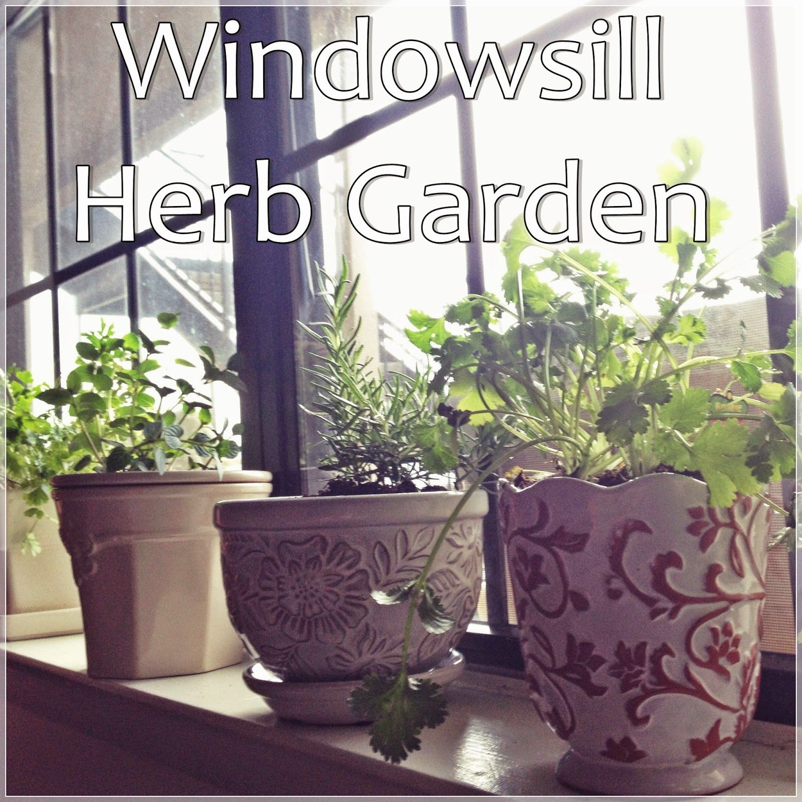 Windowsill Herb Garden - great for apartment dwellers!  #apartmentliving #gardening