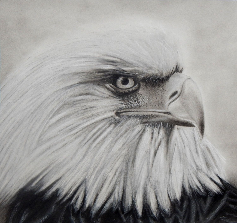 Eagle Drawing, Print of Charcoal Eagle, Eagle Print ...