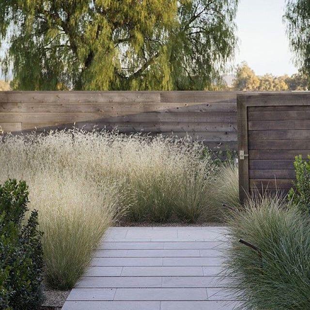 Napa Valley garden w/Bouteloua 'Blonde Ambition' by designer Scott Lewis