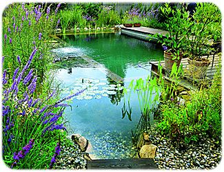Natural Pool With Plants And Biofilter Uses No Chemicals From Swimming Natural